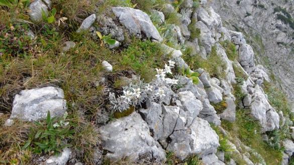 Edelweiss am Kahlersberg